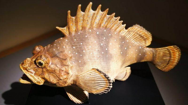 生命力あふれる海の生き物を巧みに表現!陶芸家 長瀬渉さんの世界
