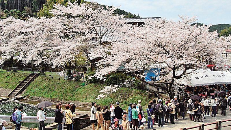 平成最後の「桜陶祭」満開の桜の中、約1万3千人の見物客